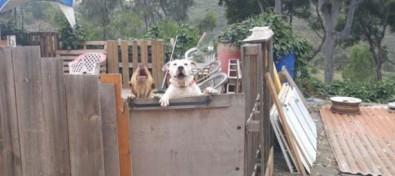 La Policía Canaria localiza al propietario de dos perros peligrosos que intimidaban a vecinos del municipio de Teror