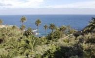 El Cabildo impulsa un proyecto para catalogar y conservar la palmera canaria
