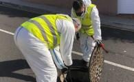 La próxima semana comienza la campaña de fumigación de la red de saneamiento de El Rosario