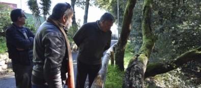 Profesores de la ULL ensalzan los valores botánicos y didácticos del bosque del Adelantado