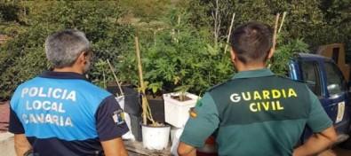 La Guardia Civil incauta una plantación de marihuana en Gran Canaria