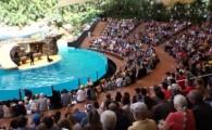Loro Parque reabre al público la instalación de los leones marinos