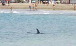 El Gobierno de Canarias y el Ejecutivo central diseñan un plan para garantizar la seguridad del delfín localizado en la costa sur de Tenerife