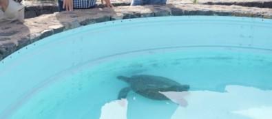 El Cabildo atiende a más de 900 animales en La Tahonilla durante el primer semestre del año