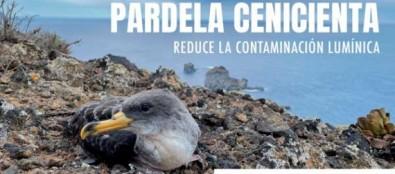 Cabildo de El Hierro inicia la campaña de Atención a la Pardela Cenicienta 2021