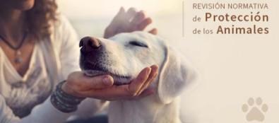 El borrador de la Ley de Protección de Animales acaba la fase de información pública con unas 9.000 aportaciones