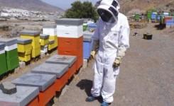 El Cabildo destina 8.000 euros a ayudas para las cinco asociaciones de apicultores registradas en Gran Canaria