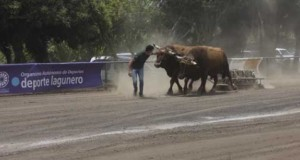 Solo cuatro centésimas separan a los tres primeros de Toros de Primera del arrastre de ganado