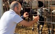 El Cabildo de El Hierro subvencionará el 100% de las cuotas de la Seguridad Social a los ganaderos en 2021