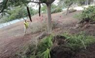 El Cabildo rehabilita los jardines del carril bus de la TF-1 en su acceso a Santa Cruz