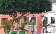 El Ayuntamiento de Valle Gran Rey comienza la poda de especies arbóreas por todo el municipio