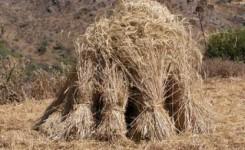 Agricultura destina ayudas valoradas en 224.000 euros para los productores de cultivos forrajeros