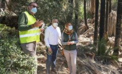 El Cabildo limpiará de cañas 6.700 palmeras y decenas de barrancos como medida preventiva contra los incendios