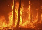 Alerta por Riesgo de Incendios Forestales Gran Canaria, Tenerife, La Palma, La Gomera y El Hierro