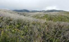 Transición Ecológica y Cabildo de La Gomera restaurarán hábitats degradados del Parque Nacional de Garajonay