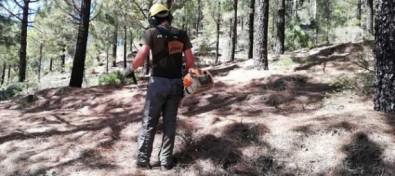 El Cabildo acondiciona la finca de Los Patios para prevenir los incendios forestales